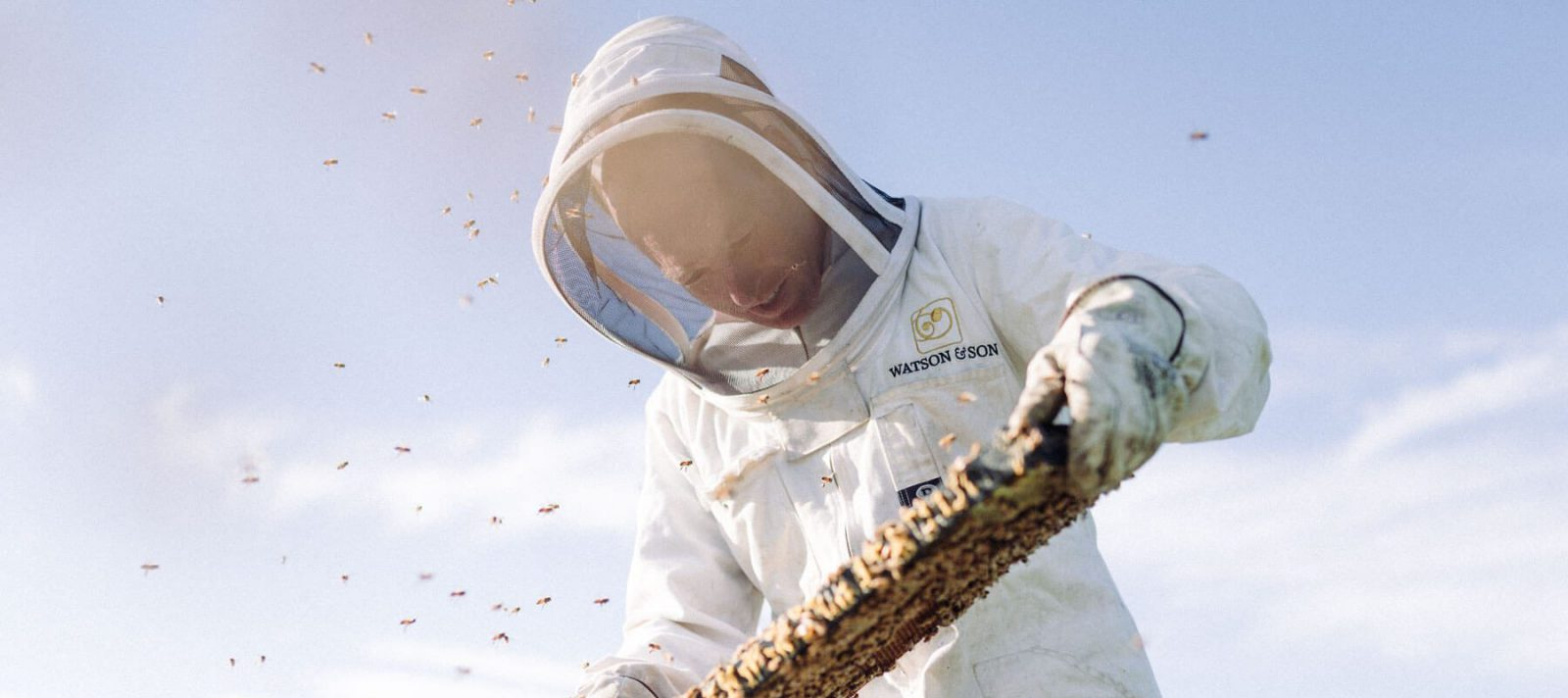 Man collecting honey from Bees
